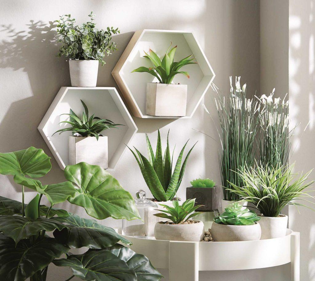 O roślinach we wnętrzu, czyli jak się dotlenić nie wstając z kanapy